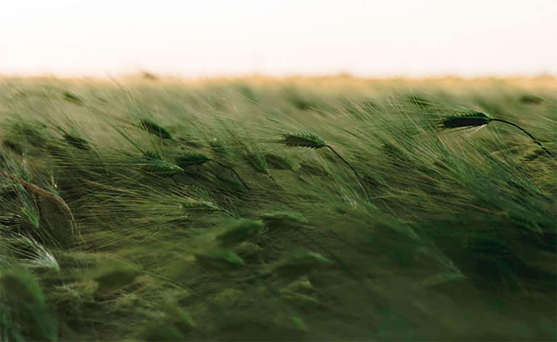 Case Ilmatar: Uusi tuulipuisto ja Ilmatar valtakunnalliseksi puheenaiheeksi aktiivisella mediaviestinnällä